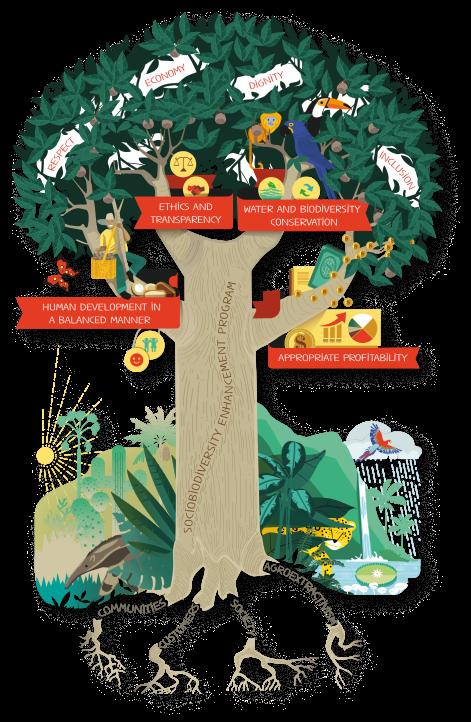 Beraca's Sociobiodiversity Enhancement Program®